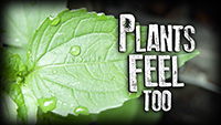 Plants feel too